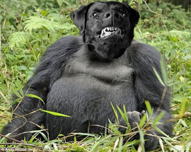 Gorilla-Dog (Adam P)
