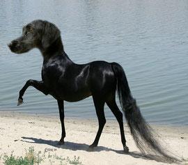 Horse-Dog (Madison S)