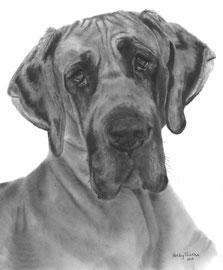 In liefdevolle herinnering aan 'Fayah de Duitse Dog' - hondenportret