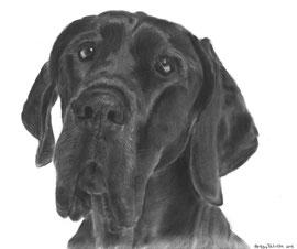 'My Noa' - hondenportret