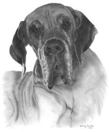'Jaelle de Duitse Dog' - hondenportret
