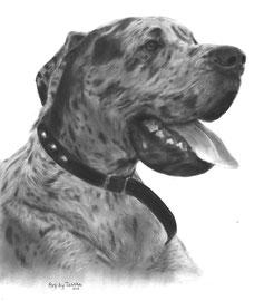 'Nero de Duitse Dog' - hondenportret