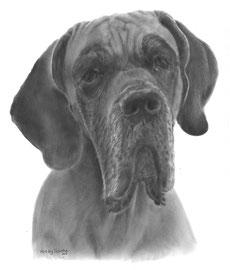 'Jersey de Duitse Dog' - hondenportret