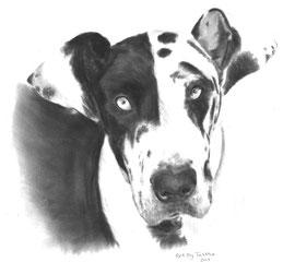 In liefdevolle herinnering aan 'Zeva de Duitse Dog' - hondenportret