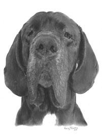 'Pablo de Duitse Dog' - hondenportret