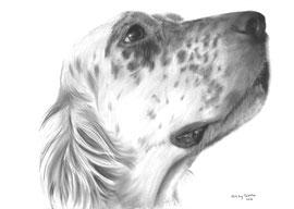 In liefdevolle herinnering aan 'Dazzle de Engelse Setter' - hondenportret