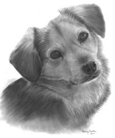 'Jamie de Poolse Mix' - hondenportret