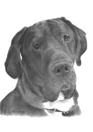 'Tyson de Duitse Dog' - hondenportret