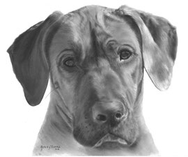 'Ozi de Pronkrug' - hondenportret