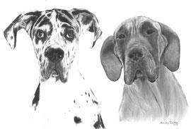'Max en Lily de Duitse Doggen' - dubbel hondenportret