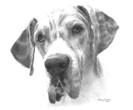 'In liefdevolle herinnering aan Bella de Duitse Dog' - hondenportet