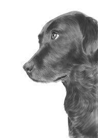 'Lovely Lab' - hondenportret