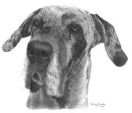 'Faya de Duitse Dog' - hondenportret
