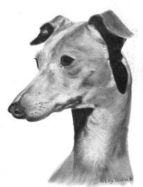 'Jemma de Italiaanse Windhond' - hondenportret
