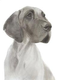 In liefdevolle herinnering aan 'Charlotte de Duitse Dog' - hondenportret
