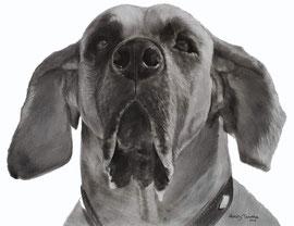 'In liefdevolle herinnering aan Icon de Duitse Dog' - hondenportret