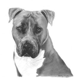 'Stunning Staffy' - hondenportret