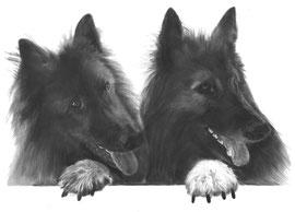 'James en Charlie de herders' - hondenportret