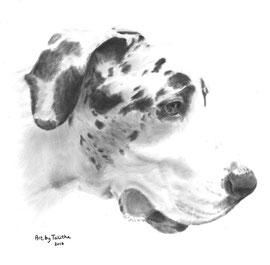 In liefdevolle herinnering aan Bart de Duitse Dog' - hondenportret