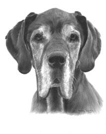 In liefdevolle herinnering aan 'Lotus de Duitse Dog' - hondenportret
