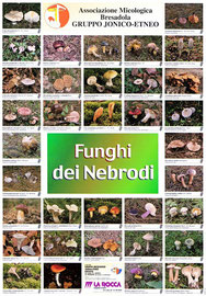 Funghi dei Nebrodi