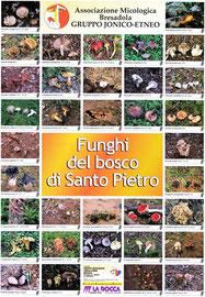 Funghi del bosco di Santo Pietro