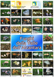 funghi della Valle dell'Alcantara