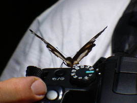 """Kontrolle"" durch den Schmetterling"
