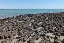 Stromalithen
