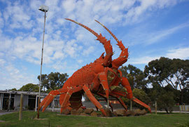 Riesenlobster in South Australia