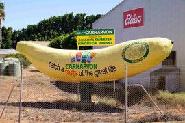 Größte Banana Australiens