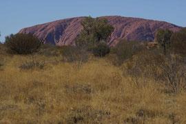 Obwohl hier wenig Niederschlag fällt ist der heilige Ort der Aborignal People noch außenherum bewachsen