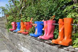 Als Gartenabgrenzung in Höfn (Island) gesehen