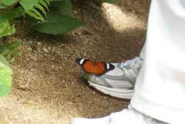 Schmetterlinge stehen auf weiss, blau und helle Farben
