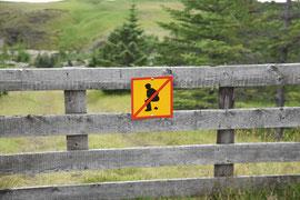 Statt Hunde sind Touristen stellenweise ein wirkliches Problem