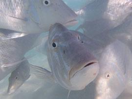 Neugierige Blicke am Ningaloo Reef