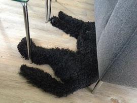...und wenn ich schlafen will, liege ich mit dem Kopf unterm Sofa, gemütlich direkt auf dem Boden. Schön isses so!