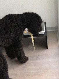 Ja, ab und an bekomme ich Spaghetti! Ich liiiiiiiiebe Spaghetti!!!