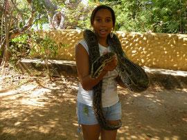 Sabina with python