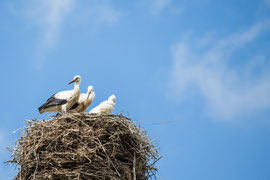 Gutshaus Laschendorf Umgebung: Storch Nest