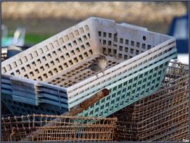 Moineau sur mannes à quai au port ostréicole de La Teste de Buch (Bassin d'Arcachon)