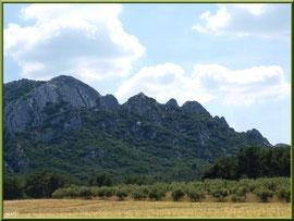 Oliveraie aux pieds des Alpilles sur la route menant à Aureille (Bouche du Rhône)