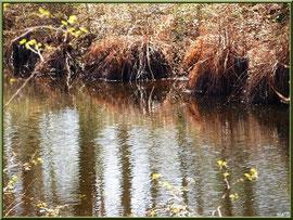 Reflets sur le Canal des Landes au Parc de la Chêneraie à Gujan-Mestras (Bassin d'Arcachon)
