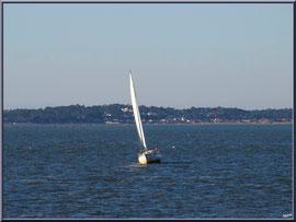 """Voilier sur le Bassin, vue depuis le front de mer de la """"Ville d'Eté"""" à Arcachon"""