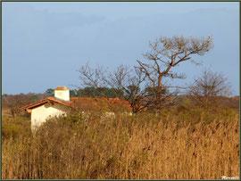 Ancienne maison de gardien de chasse et pêche restaurée en bordure de La Leyre parmi les roseaux, Sentier du Littoral, secteur Port du Teich en longeant La Leyre, Le Teich, Bassin d'Arcachon (33)