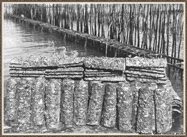 Tuiles et leur naissain d'huîtres sur un parc