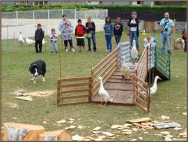 Démonstration de travail d'un chien de berger à la Fête au Fromage, Hera deu Hromatge, à Laruns en Vallée d'Ossau (64)