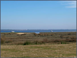 Prés salés à Claouey et le Bassin d'Arcachon