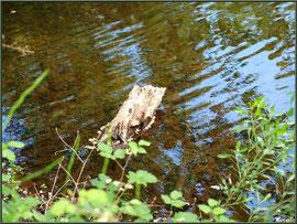 Souche et reflets sur le Canal des Landes au Parc de la Chêneraie à Gujan-Mestras (Bassin d'Arcachon)