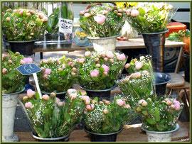 Marché de Provence, samedi matin à Arles (13), étal de fleurs